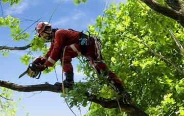 find trusted rated Essex tree surgeons