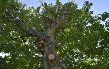 what is Essex tree surgery?